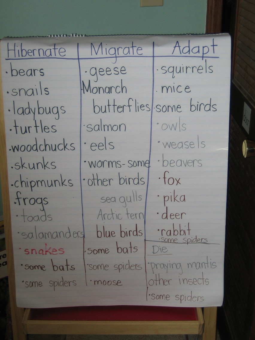 also Img besides Domestic Animals also Hibernation Worksheets For Preschool also Original. on printable worksheets on animals that hibernate