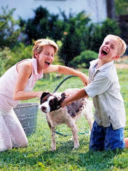photo of washing dog, modeling comprehension through photgraphs