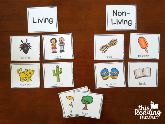 sorting picture cards as living vs non-living